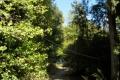 nature39