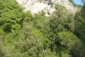 nature79