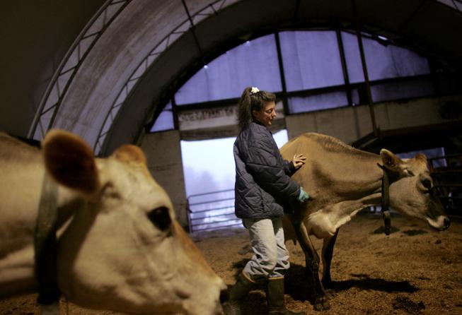 Το γάλα και το κρέας, οι αγελάδες, τα πρόβατα..